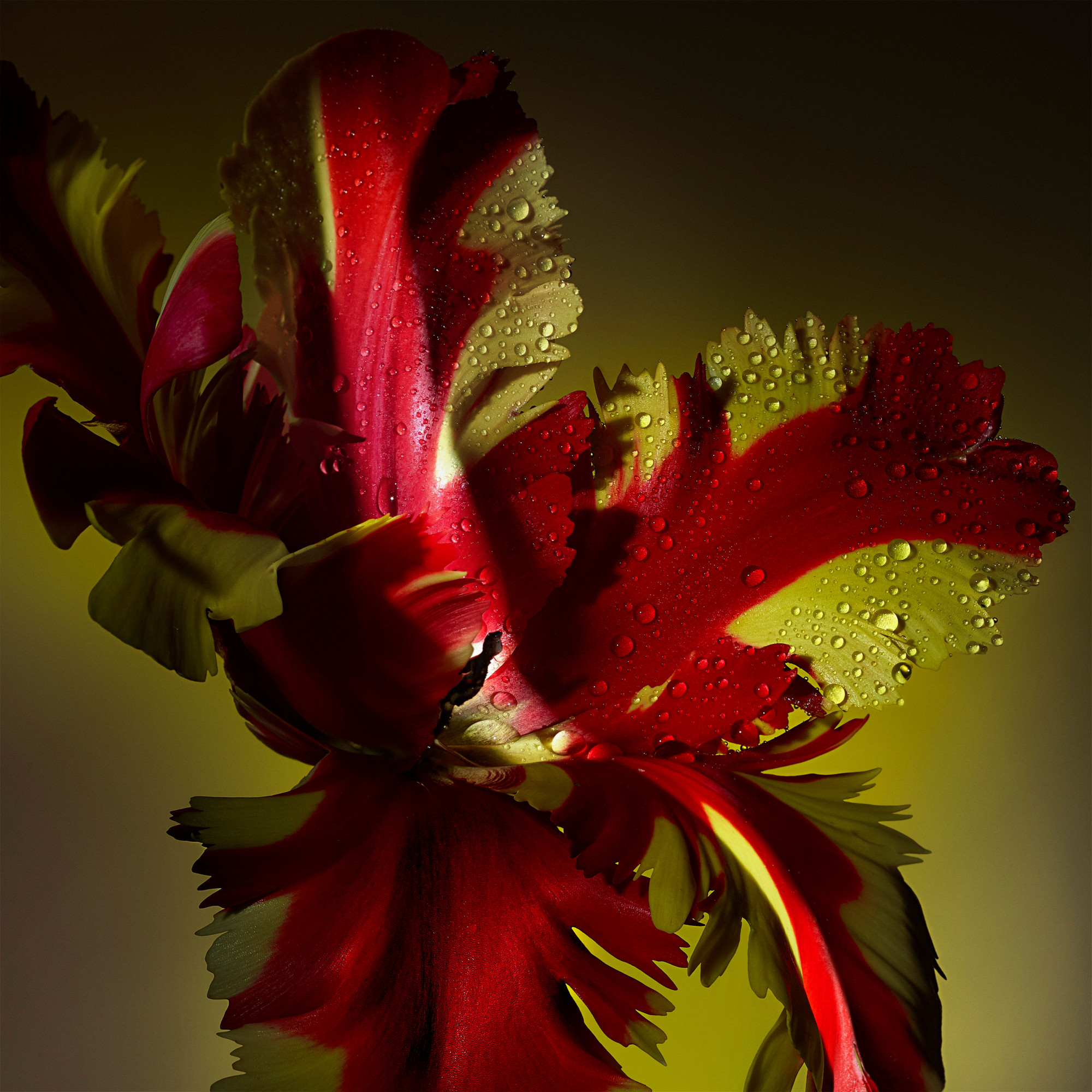 Inès Dieleman Floral
